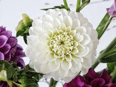 Auf der Mammilade|n-Seite des Lebens | Personal Lifestyle Blog | Blume | Blüte | Dahlien | Dahlien weiß | Dahlien pink