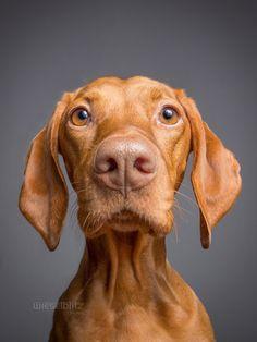 Handsomedogs: Elke Vogelsang
