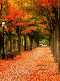 """Red Carpet, Princeton NJ"" by yuko kudos on ~ Beautiful Princeton Autumn Morning, Princeton, New Jersey Beautiful World, Beautiful Places, Beautiful Pictures, All Nature, Amazing Nature, Fall Pictures, Nature Pictures, Autumn Scenes, Autumn Morning"