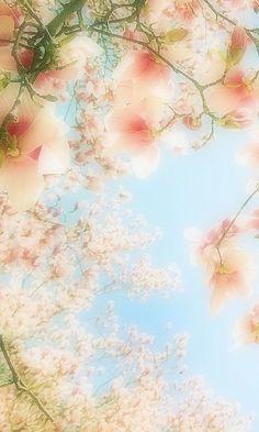 Spring, bloesembomen in Japan Pretty Pastel, Beautiful Flowers, My Flower, Flower Power, Pastel Colors, Soft Pastels, Soft Colors, Light Spring, Belle Photo