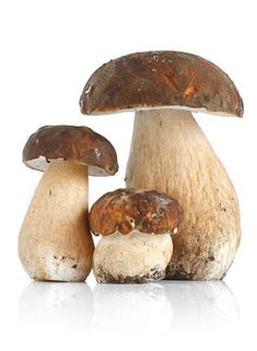 Find Three Boletus Edulis Mushrooms Over White stock images in HD and millions of other royalty-free stock photos, illustrations and vectors in the Shutterstock collection. Photo Champignon, Wild Mushrooms, Stuffed Mushrooms, Meat Substitutes, Mushroom Fungi, Fruit Plants, Food Articles, Colorful Garden, Fun Cooking