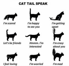"""Cat Tail Speak — Go Freak Out Your Friends And Tell Them You Can Read Cats' Minds… """"don't Do That."""" """"why?"""" """"your Cat Doesn't Like It. He's Pissed."""" """"…….how Do You Know?"""""""