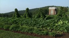 In the Vegetable Garden at Monticello