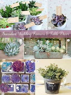 Succulent wedding favours and table decor