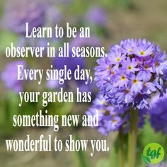 Is Hydroponic Gardening Organic Garden Works, Love Garden, Gardening Memes, Therapy Quotes, Garden Quotes, My Secret Garden, Secret Gardens, Garden Signs, Flower Quotes