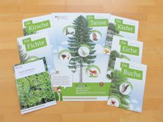 FREE: Poster for the forest primer - Wald Easy Science Experiments, Science For Kids, Science Activities, Moth Tattoo Design, Primary School Teacher, Teaching Biology, Magazine Design, Special Education, Poster