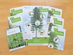 materialwiese: KOSTENLOS: Poster zur Waldfibel für die Grundschule