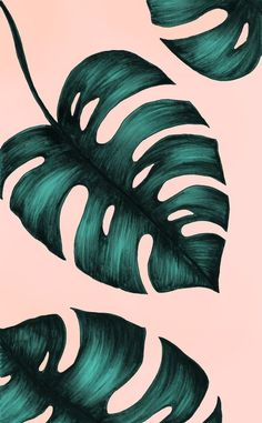 New ideas for wall stencil leaves wallpapers Plant Wallpaper, Tropical Wallpaper, Summer Wallpaper, Iphone Background Wallpaper, Pastel Wallpaper, Screen Wallpaper, Tropical Art, Plant Art, Photo Wall Collage