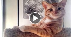 YOU CAN run but YOU CANNOT hHOLD your LAUGH! Funny CAT compilation