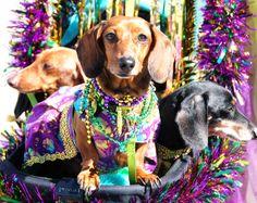 19th Annual Krewe of Barkus & Meoux Mardi Gras Parade - Galveston 2017