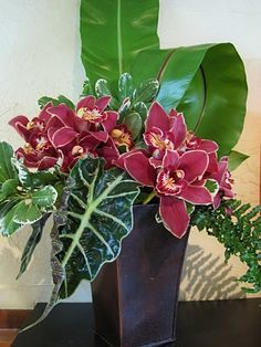 asplenium, alocasia and cymbidium orchids