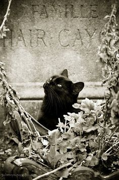 I loved this cat - kept posing for me for ages. Montmartre Cemetery, Paris