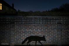 Shadow walker by Richard Peters, Winner Urban category #WPY51 #WildlifePhotographeroftheYear