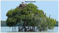Underwater Mangrove Trees Mangrove reserve in china Mangrove Forest, Marine Aquarium, Island, Underwater Photography, Sustainability, Surfing, Ocean, Landscape, World