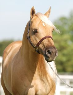 Reminds me of my Palomino buddy from my childhood in Ohio.  I sure loved that Pony.
