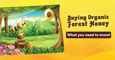Buying Organic Forest Honey: What You Need to Know Honey Mead, Honey And Co, Modern Food, Non Organic, Creamed Honey, Honey Syrup, It Hurts Me, A Whole New World, Food Industry