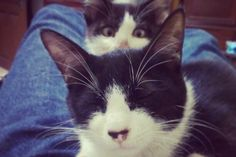 MUST SEE: Cats Hilariously Photobombing Other Cats - Pet360 Pet Parenting Simplified