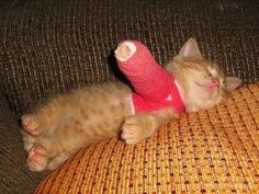 This shouldn't make me grin, but who can resist a plastered kitten!