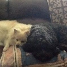 Best buddies. Gracie and Priscilla