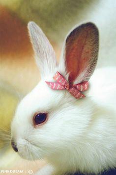 ~ bunny ~