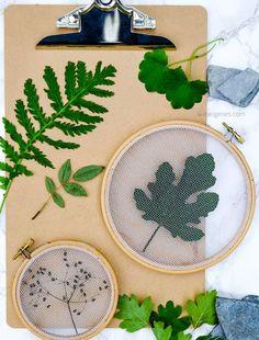 Getrocknete Blätter mit Tüll im Stickrahmen einspannen   Pflanzen Deko kreativ und selbstgemacht   waseigenes.com