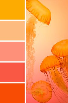 I LOVE this palette! Pinky-orange tones give a real mood-lifting pop - great for limited-run product releases or featured content Sunset Color Palette, Orange Palette, Orange Color Palettes, Sunset Colors, Colour Pallette, Colour Schemes, Color Combos, Bright Colour Palette, Autumn Color Palette
