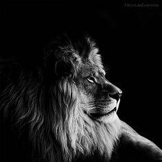 Animale in bianco e nero