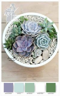 Miss Pinks Craft Spot featuring Stampin' Up! products by Sue Vine Blue Succulents, Succulent Pots, Succulent Gardening, Container Gardening, Gardening Tips, Garden Plants, Indoor Succulents, Succulent Ideas, Containers For Succulents