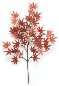 Japanese maple branch... I love these trees