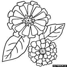 Zinnias Flower Coloring Page| Zinnias Coloring