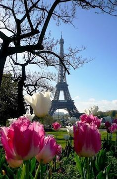 eiffel tower, flowers