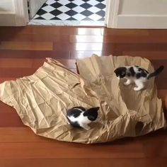 Kittens love playing with paper – Cool Cat Tree House - Süße Katzen 2020 Kitten Love, I Love Cats, Crazy Cats, Cool Cats, Funny Animal Videos, Cute Funny Animals, Cute Baby Animals, Funny Cats, Funny Humor