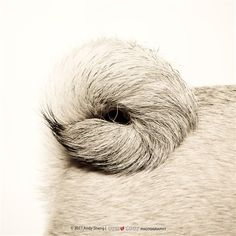 Creative pet photography. Learn how to take better pictures of your furry friends.