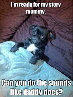 Baby pug at bedtime