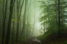 Wald #108 by HeikoGerlicher on DeviantArt