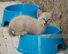 Kitten eating in a blue trough at street