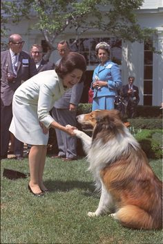 May 3, 1967, Lady Bird Johnson shakes hands with Lassie as others look on at the Keep America Beautiful Poster Presentation.  LBJ Presidential Library photo #C5290-28, public domain.