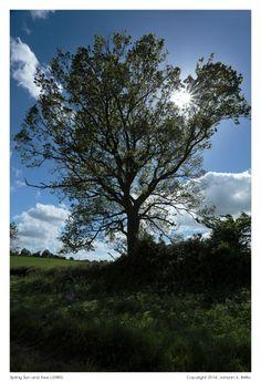 Spring Sun and Tree (2080)