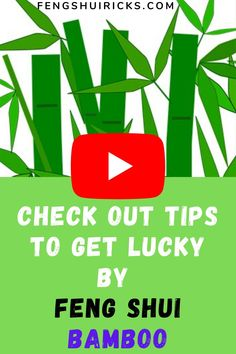 This video we are going to learn How To Get Lucky By Feng Shui Bamboo? These are simple tricks that can enhance your luck drastically. In the Feng Shui pract. Feng Shui Lucky Bamboo, Lucky Bamboo Plants, Feng Shui Tips, Common Names, Chinese Culture, Lotus, Learning, Simple, Lotus Flower