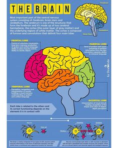 The Brain Poster by grafokids Brain Poster, Gray Matters, Diy Frame, Cool Diy, High Quality Images, Vibrant Colors, Biology, Infographics, Products