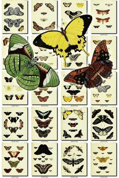 BUTTERFLIES-55 Collection of 203 vintage illustrations natural