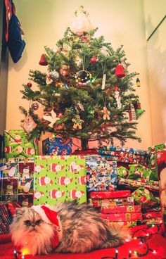Holiday Tree, Christmas Holidays, Merry Christmas, Holiday Decor, Instagram Website, Trees, Facebook, Twitter, House