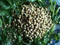 Coriander/Cilantro health benefits and home remedies