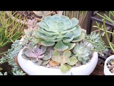DIY Succulent Garden: How to Share and Display Potted Succulents - YouTube