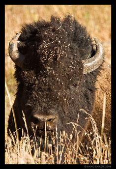 burr-face by Mac Danzig Photography on Flickr.