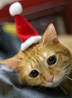 Natal felino. Doçura, não?