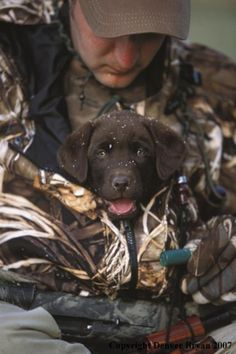 i love duck hunting dogs .To Cute Bet he wont get out to.-i love duck hunting dogs ….To Cute Bet he wont get out to fetch a duck Looks … i love duck hunting dogs ….To Cute Bet he wont get out to fetch a duck Looks much to warm - Lab Puppies, Cute Puppies, Cute Dogs, Retriever Puppies, Duck Hunting Dogs, Coyote Hunting, Pheasant Hunting, Turkey Hunting, Archery Hunting