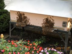 Modified European Long Hive