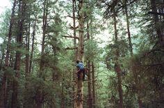 let's climb trees.