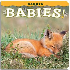 Dakota Babies! Young children will meet 13 baby animals that are as cute as can be in Dakota Babies! Tiny ducklings march on parade, a mountain goat kid plays hide-and-seek, and a fuzzy bobcat kitten peeks out of a log. Charming rhymes accompany 13 colorful and engaging photographs by some of the best wildlife photographers in the region. Dakota Babies! is a perfect learning tool for parents to teach their toddlers about animals in the Dakotas, and is sure to become a new bedtime favorite.